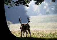 The Observer of the Rut